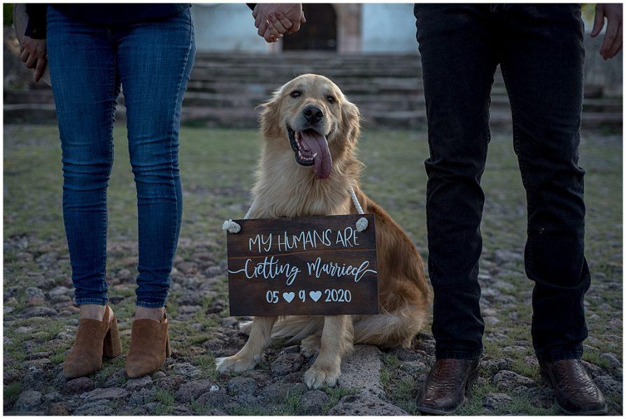fotos con mascotas 0002