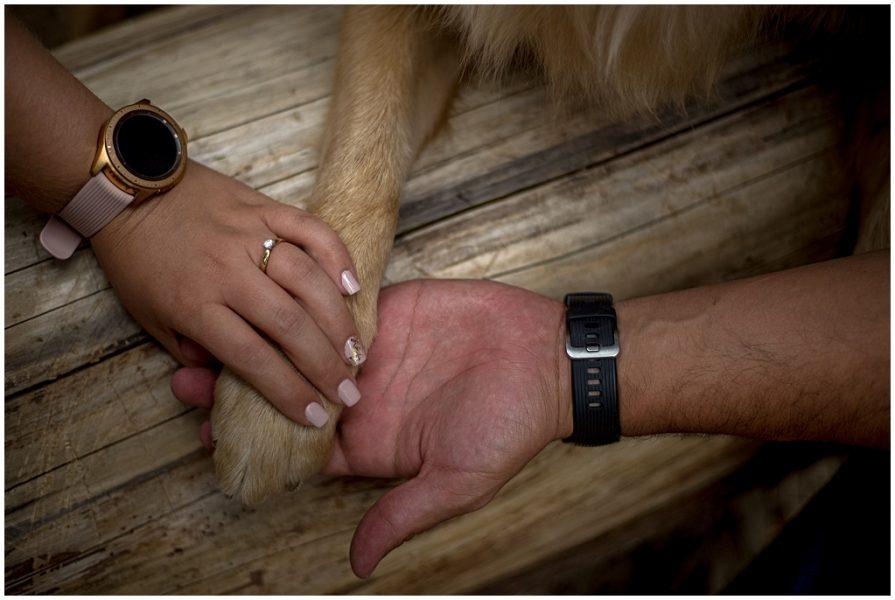 fotos con mascotas 0004